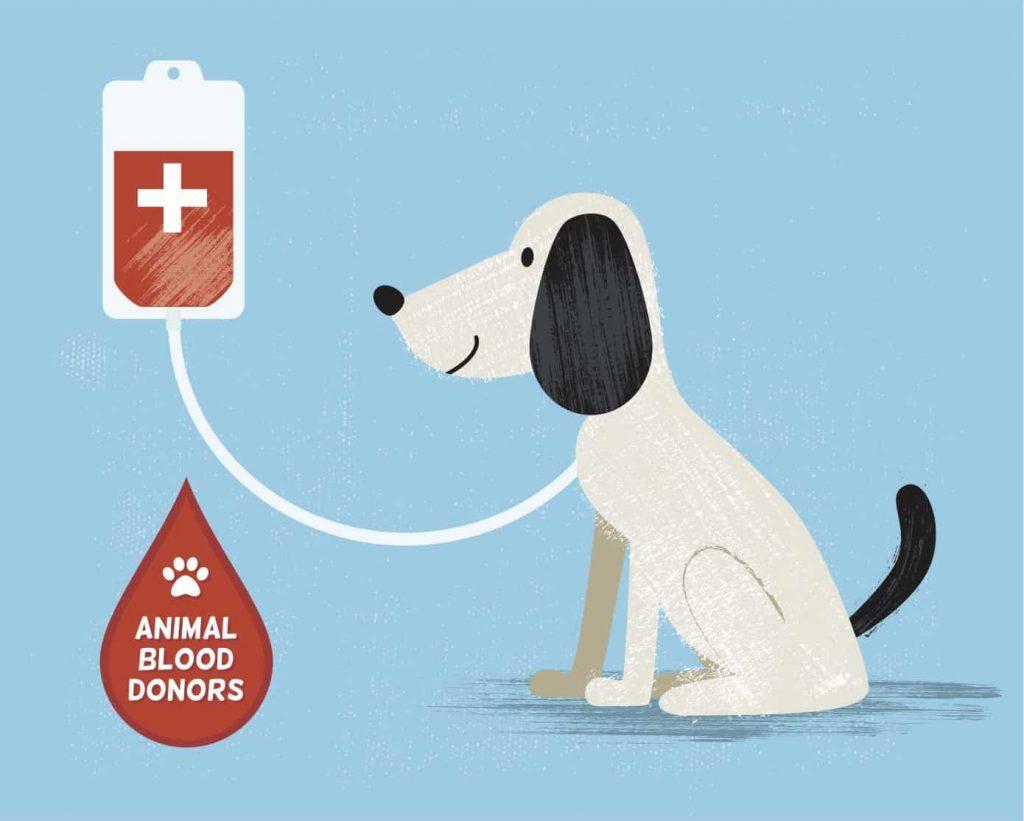 dog blood donation cartoon