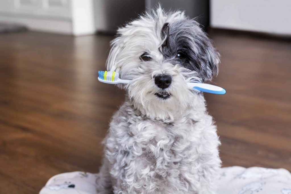 dog dental and toothbrush