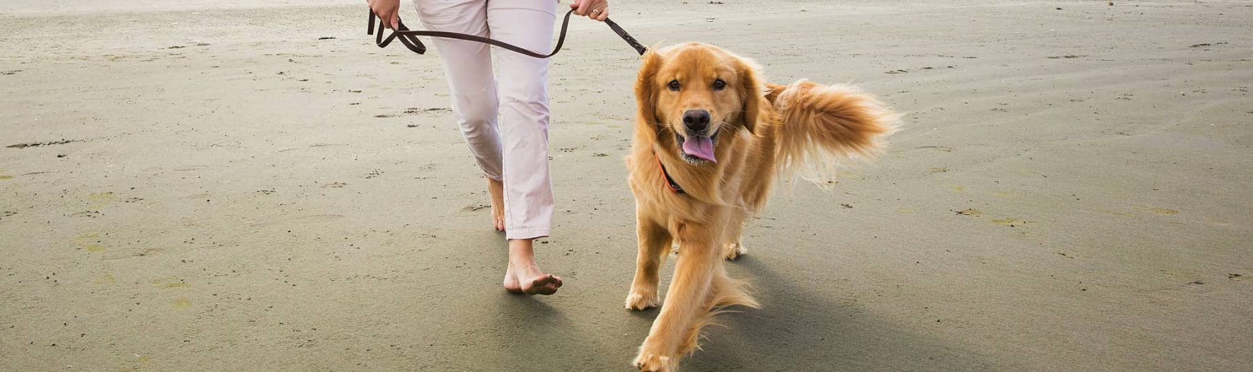 Dog owner walking a dog on the beach
