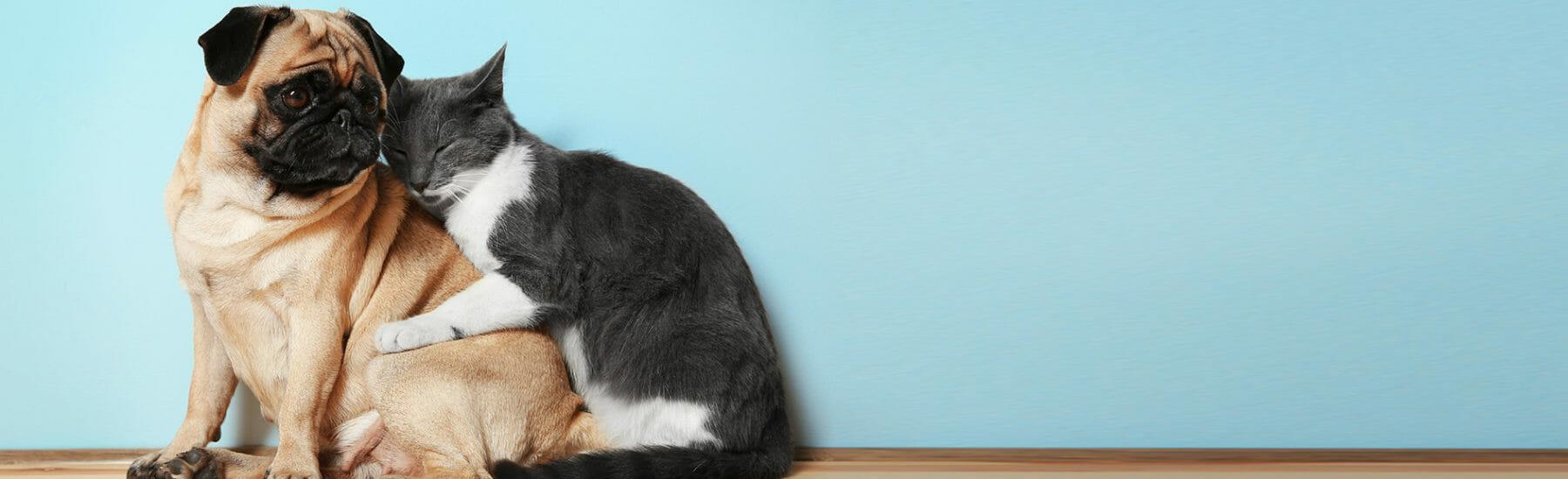 Dog and cat snuggle